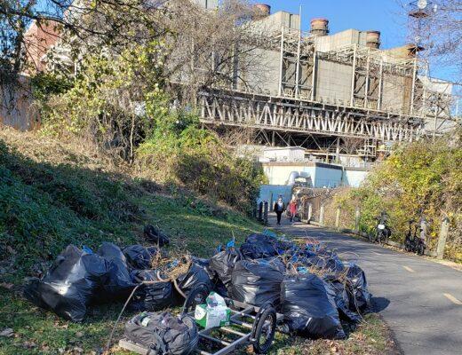Mount Vernon Trail Kudzu Cleanup